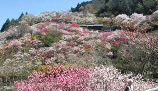 2019  高知の花見スポット~あちこち高知の桜・花桃~(その2)国道33号線を西へ